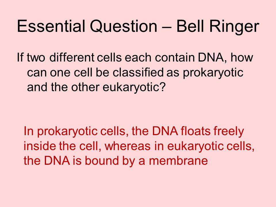 Essential Question – Bell Ringer
