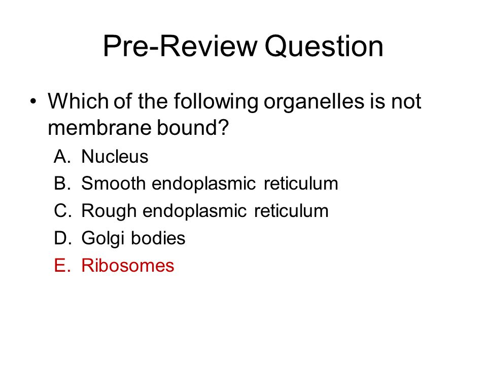 endoplasmic reticulum and cell membrane relationship questions