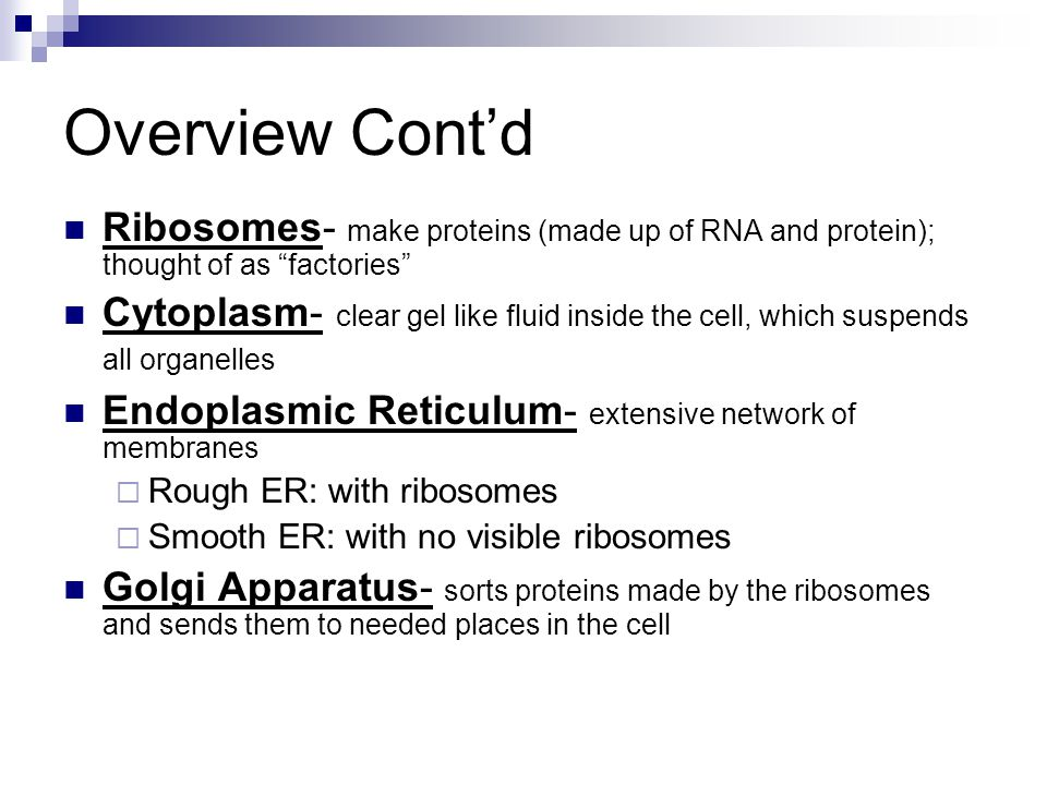 Overview Cont'd Ribosomes- make proteins (made up of RNA and protein); thought of as factories