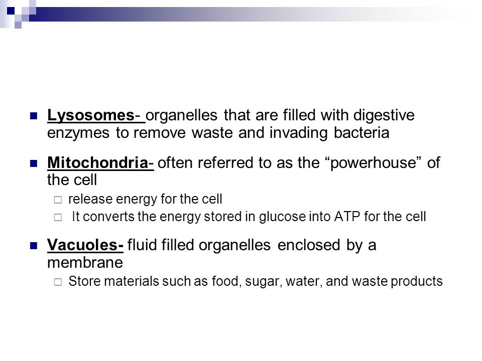 Mitochondria- often referred to as the powerhouse of the cell