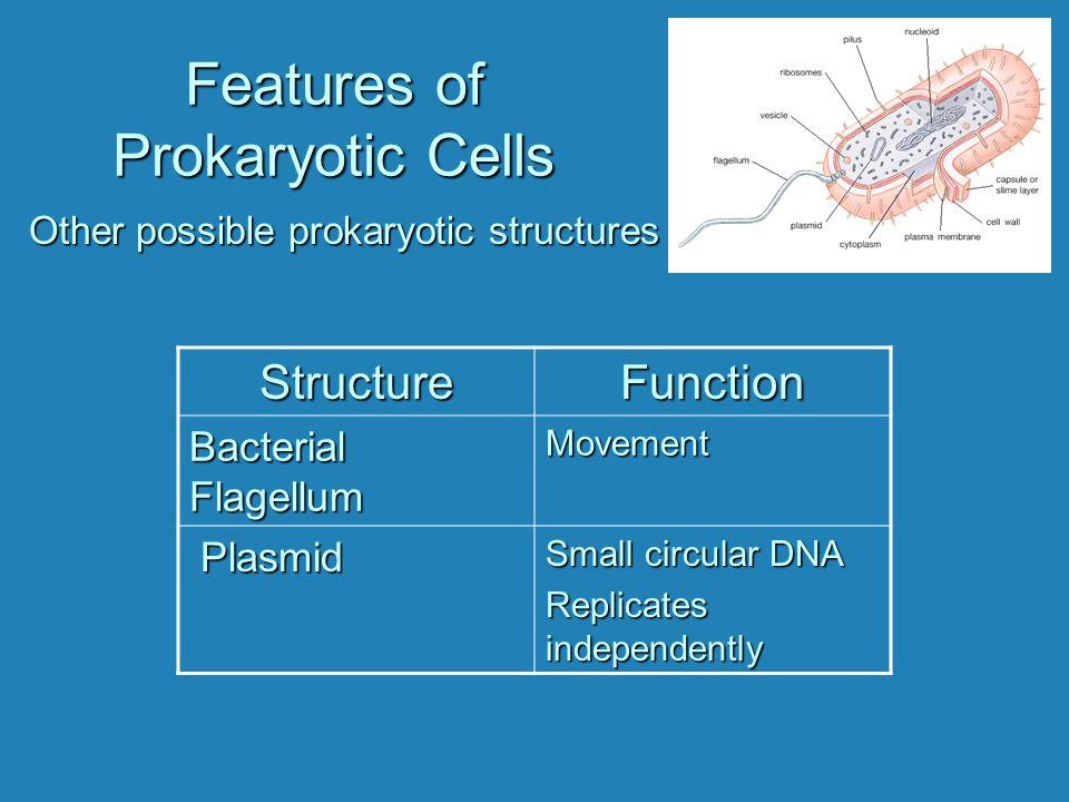 Features of Prokaryotic Cells