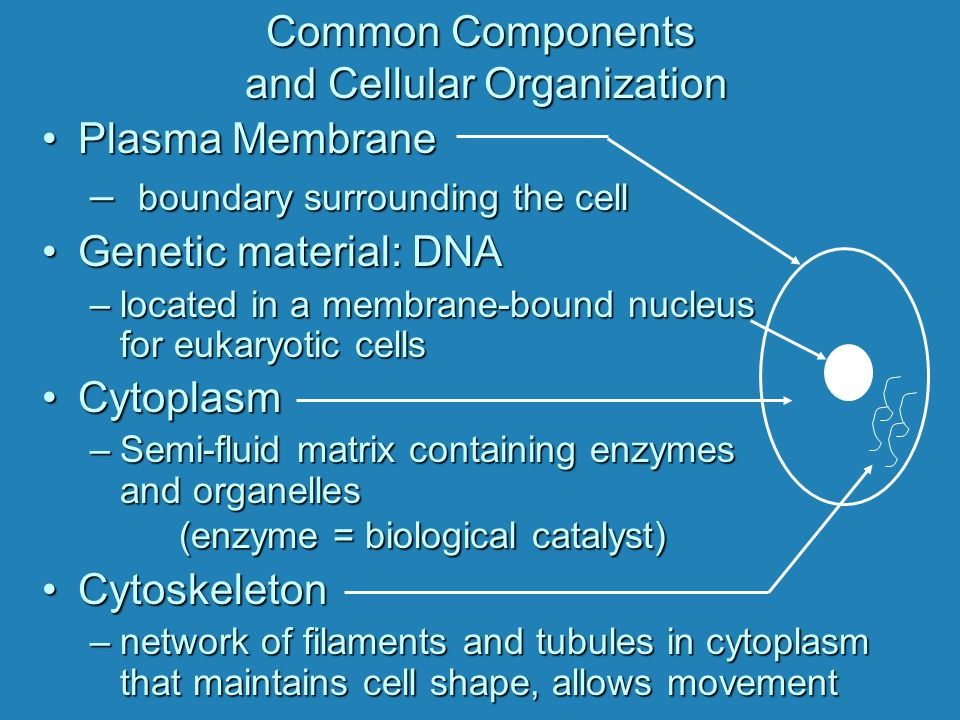 Common Components and Cellular Organization