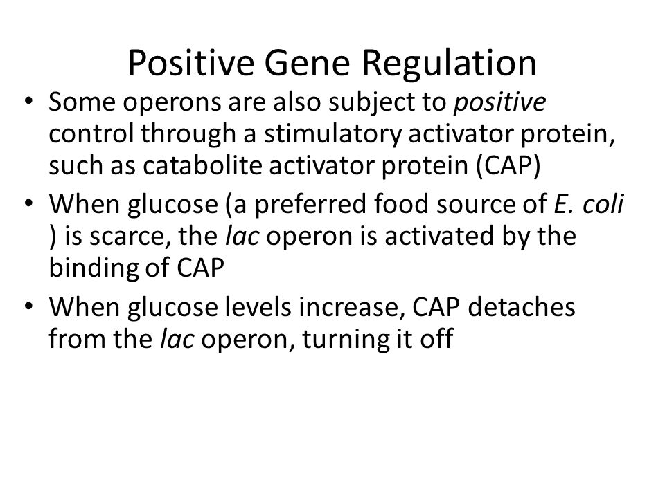 Positive Gene Regulation