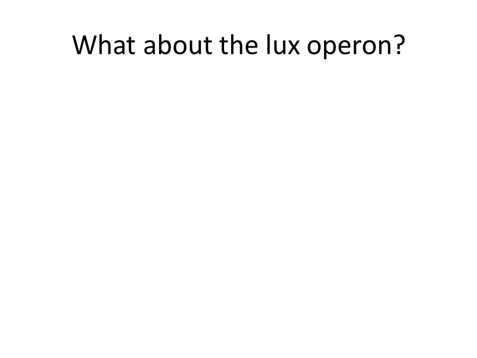 What about the lux operon