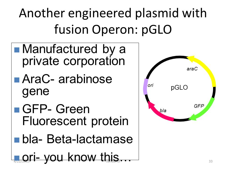 Another engineered plasmid with fusion Operon: pGLO