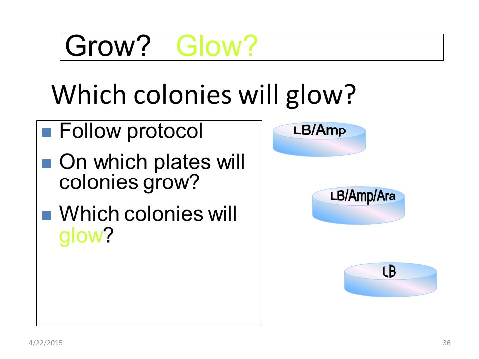 Which colonies will glow