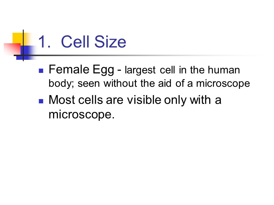 1. Cell Size Female Egg - largest cell in the human body; seen without the aid of a microscope.