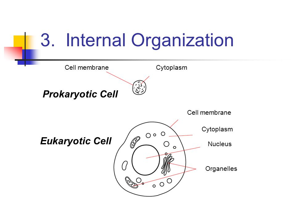 3. Internal Organization