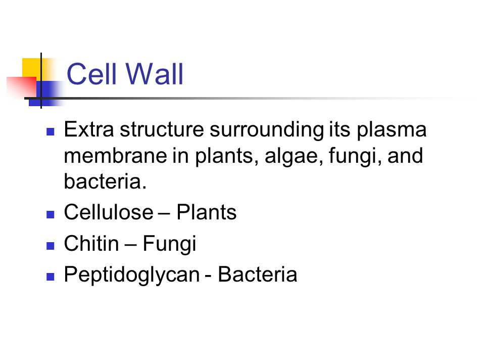 Cell Wall Extra structure surrounding its plasma membrane in plants, algae, fungi, and bacteria. Cellulose – Plants.