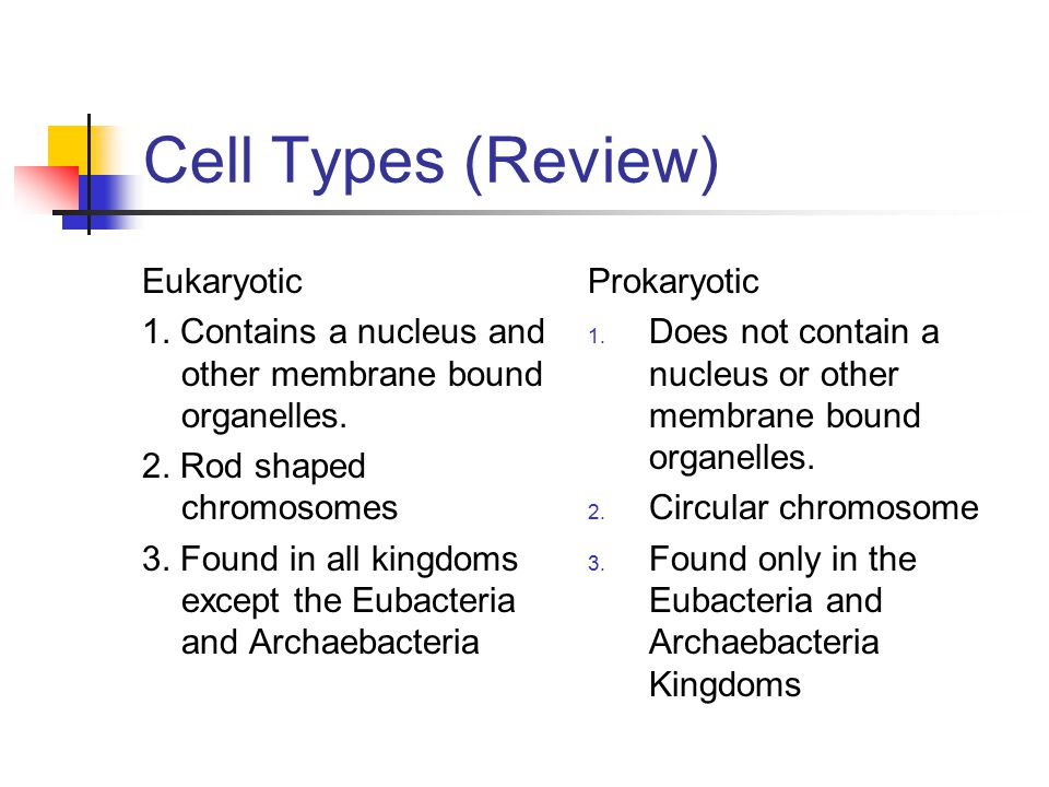 Cell Types (Review) Eukaryotic