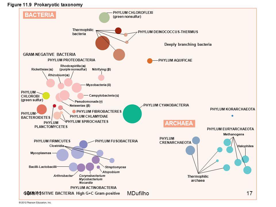 Figure 11.9 Prokaryotic taxonomy