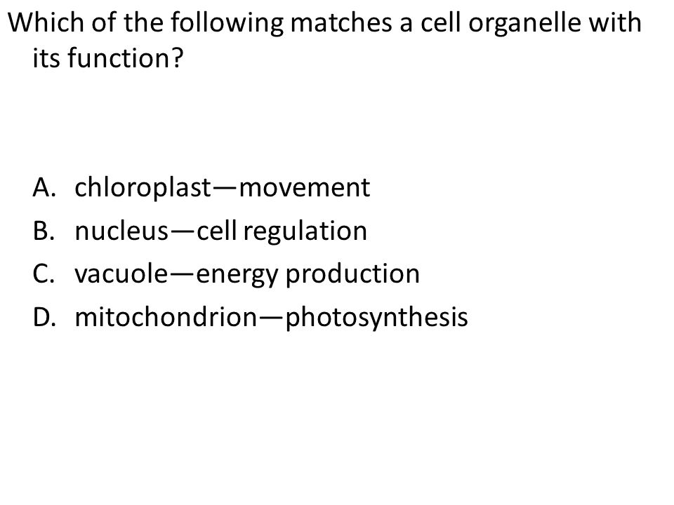 Which of the following matches a cell organelle with its function. A