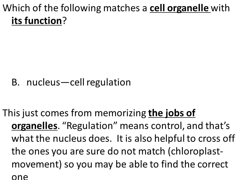 Which of the following matches a cell organelle with its function. B