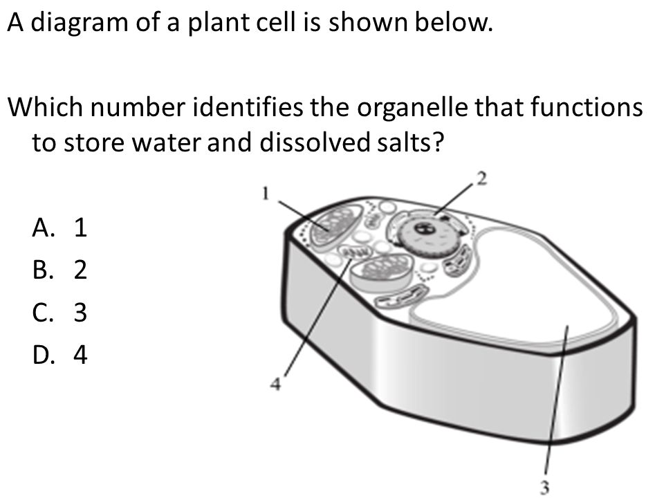 A diagram of a plant cell is shown below.