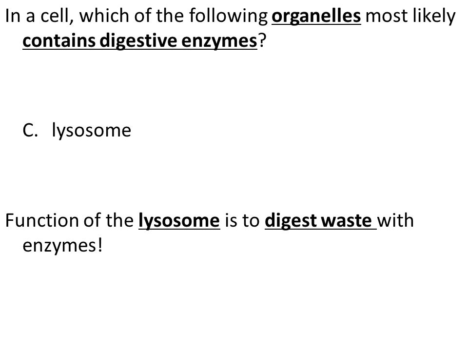 In a cell, which of the following organelles most likely contains digestive enzymes.