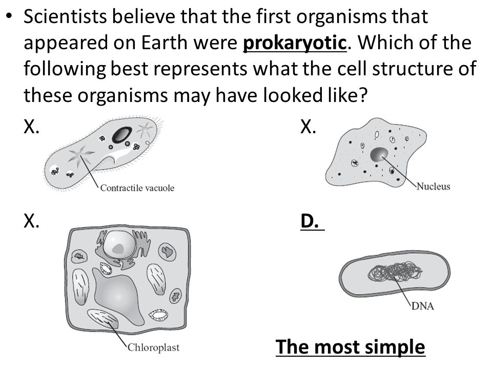 Scientists believe that the first organisms that appeared on Earth were prokaryotic. Which of the following best represents what the cell structure of these organisms may have looked like