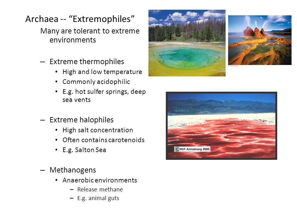 Archaea -- Extremophiles
