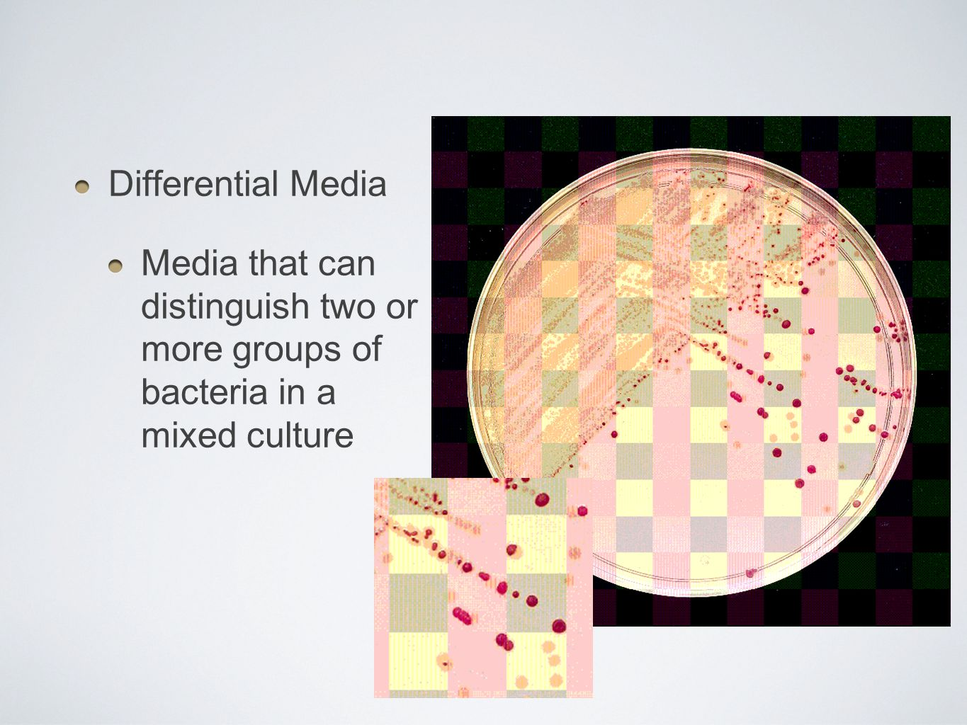 Differential Media Media that can distinguish two or more groups of bacteria in a mixed culture