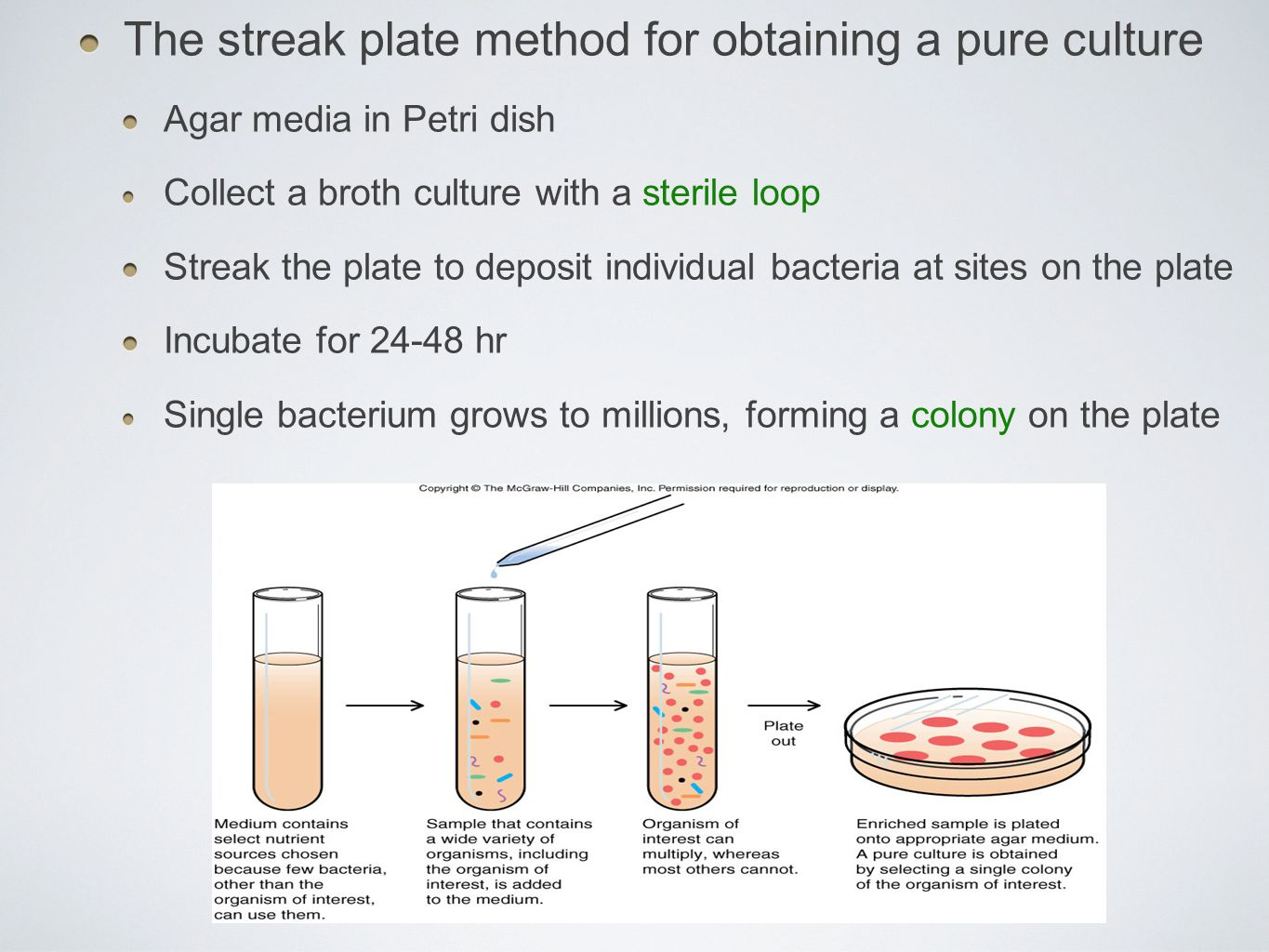 The streak plate method for obtaining a pure culture