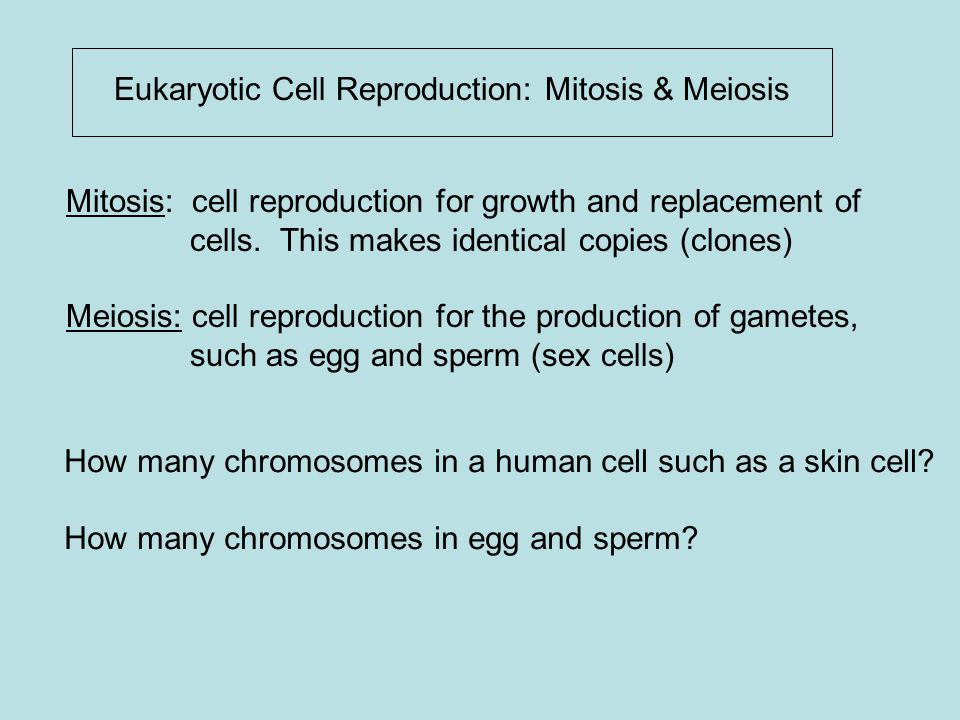 Eukaryotic Cell Reproduction: Mitosis & Meiosis