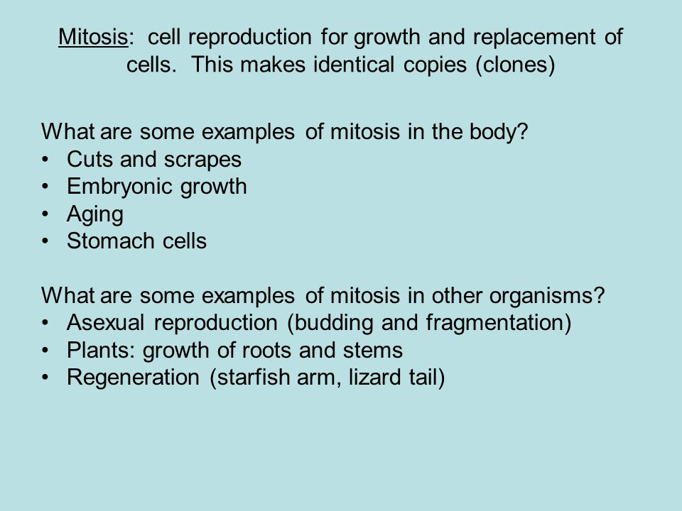 Mitosis: cell reproduction for growth and replacement of cells