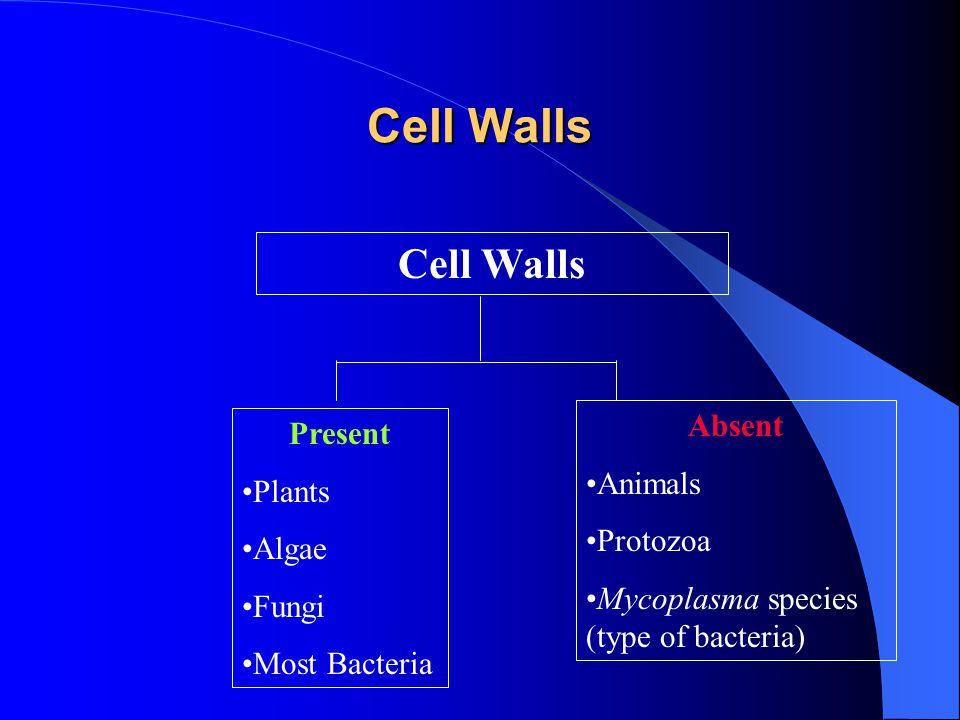 Cell Walls Cell Walls Absent Present Animals Plants Protozoa Algae