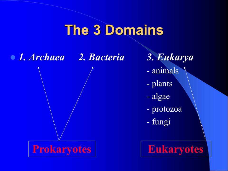 The 3 Domains Prokaryotes Eukaryotes 1. Archaea 2. Bacteria 3. Eukarya