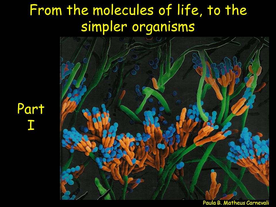 From the molecules of life, to the simpler organisms