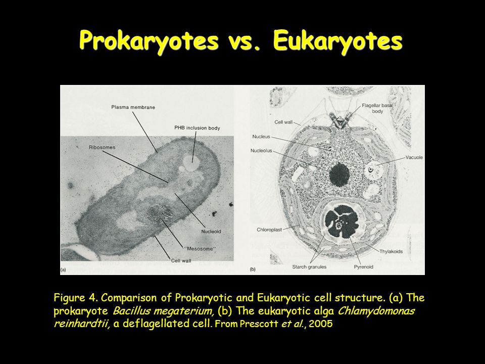 Prokaryotes vs. Eukaryotes