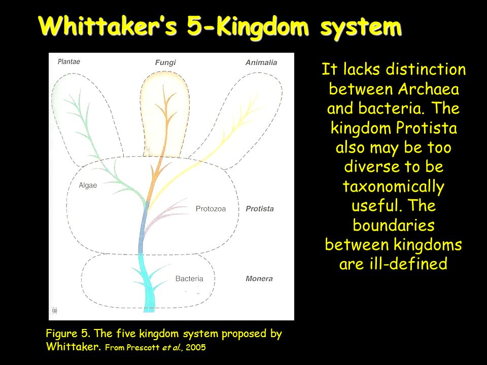 Whittaker's 5-Kingdom system