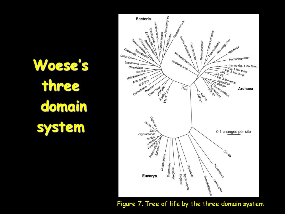 Woese's three domain system