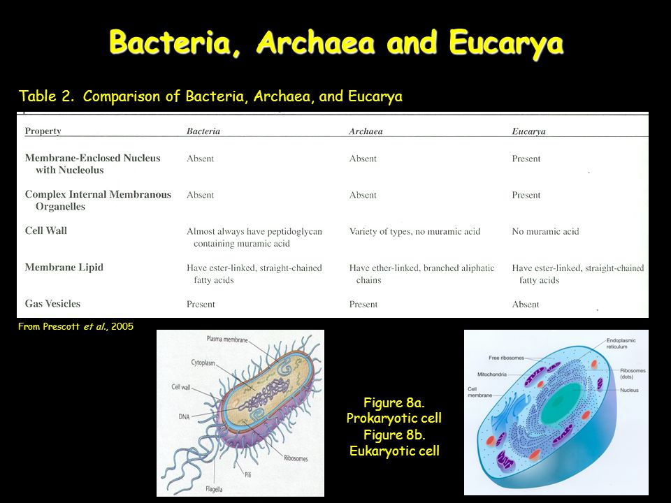 Bacteria, Archaea and Eucarya