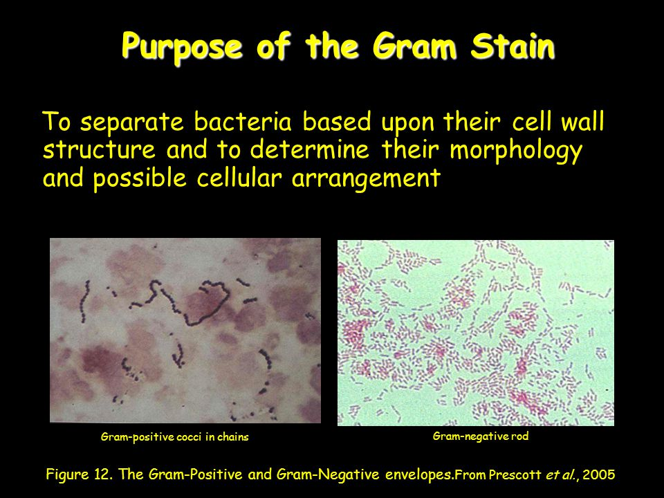 Purpose of the Gram Stain