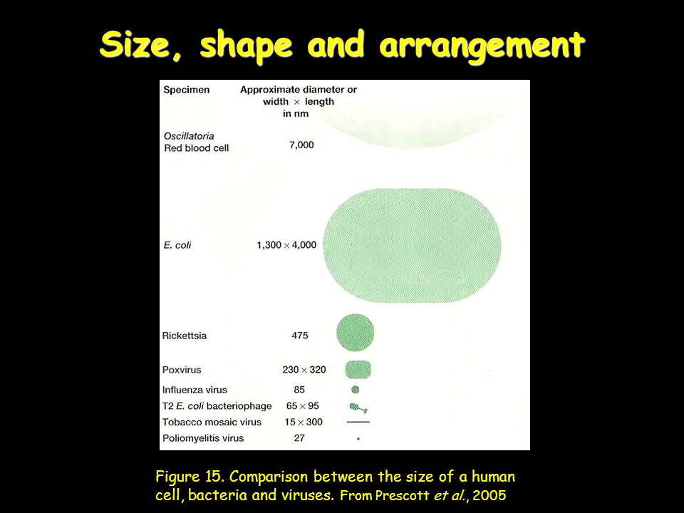 Size, shape and arrangement