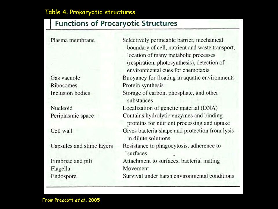 Table 4. Prokaryotic structures