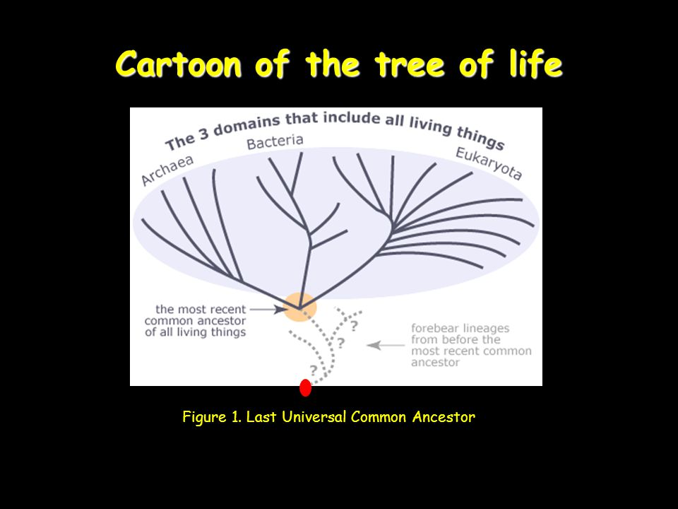 Cartoon of the tree of life