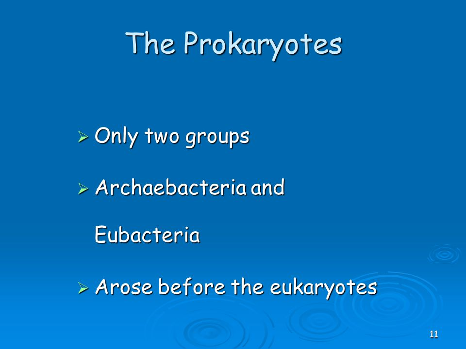 The Prokaryotes Only two groups Archaebacteria and Eubacteria