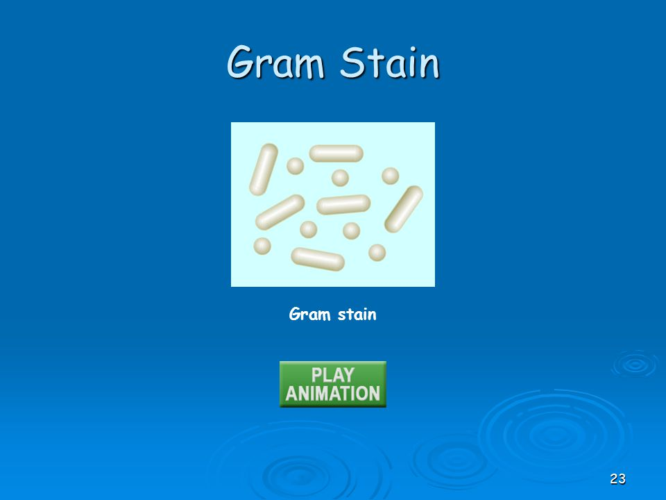 Gram Stain Gram stain