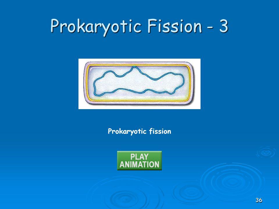 Prokaryotic Fission - 3 Prokaryotic fission