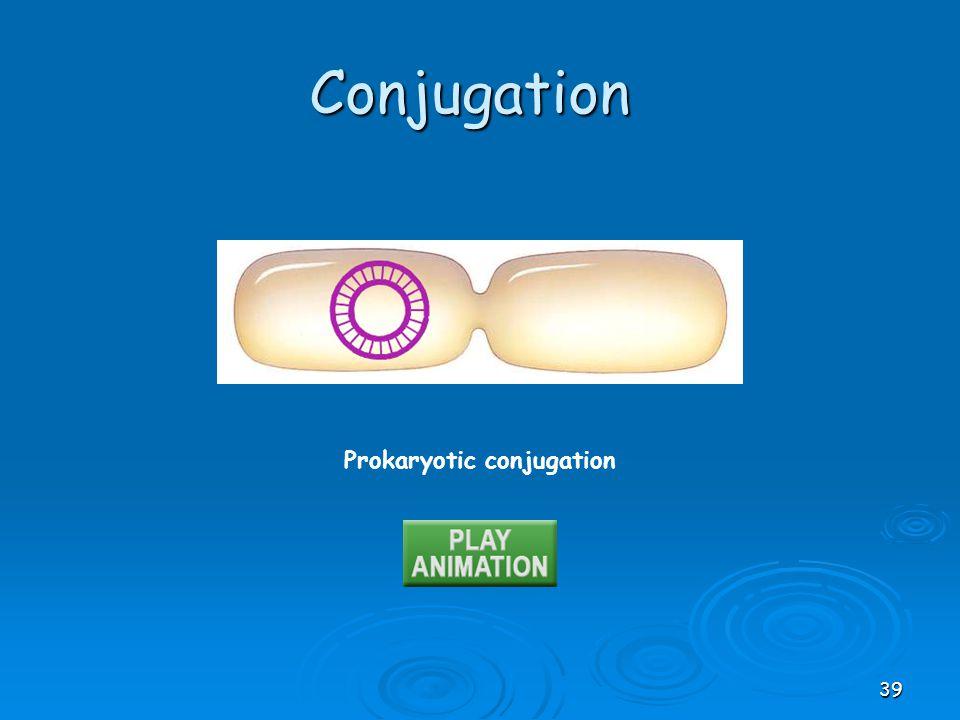 Prokaryotic conjugation