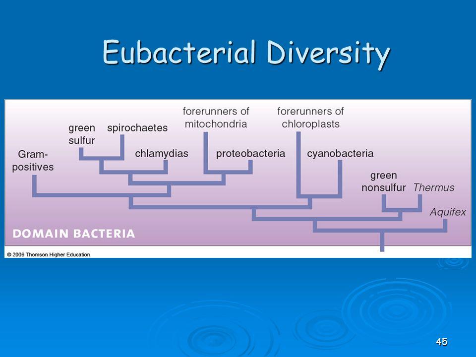 Eubacterial Diversity