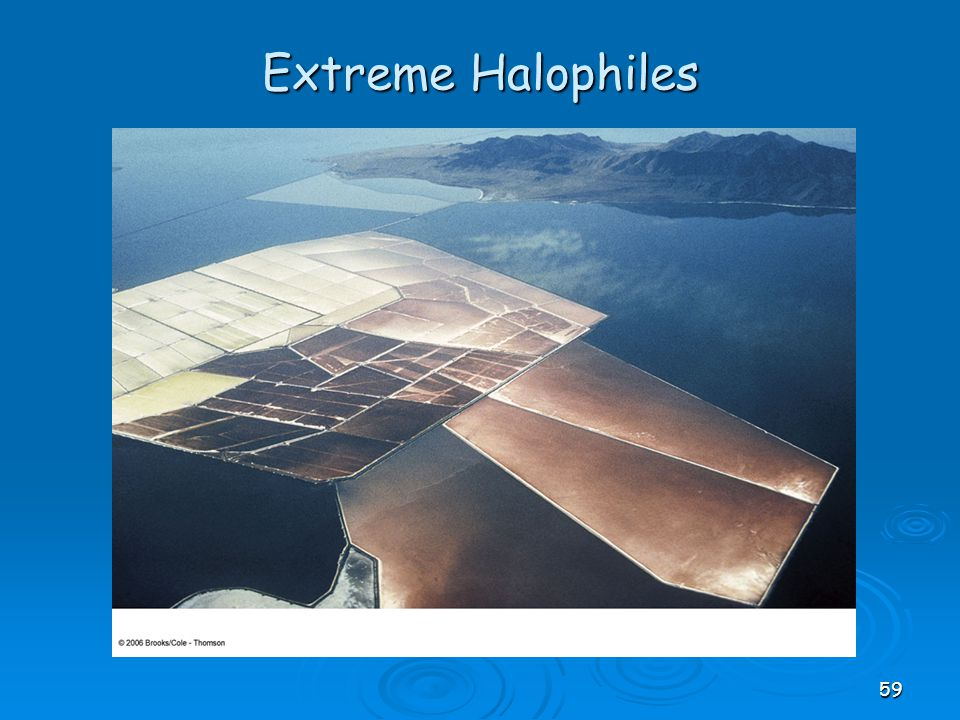 Extreme Halophiles