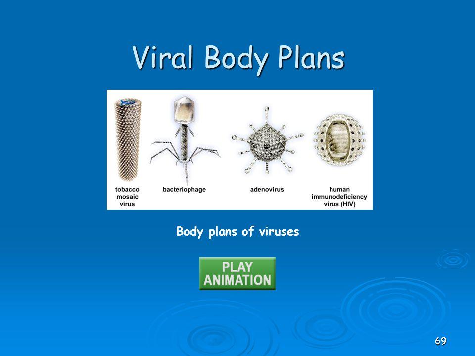 Viral Body Plans Body plans of viruses
