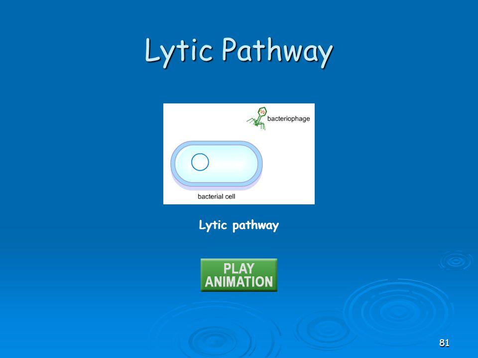 Lytic Pathway Lytic pathway