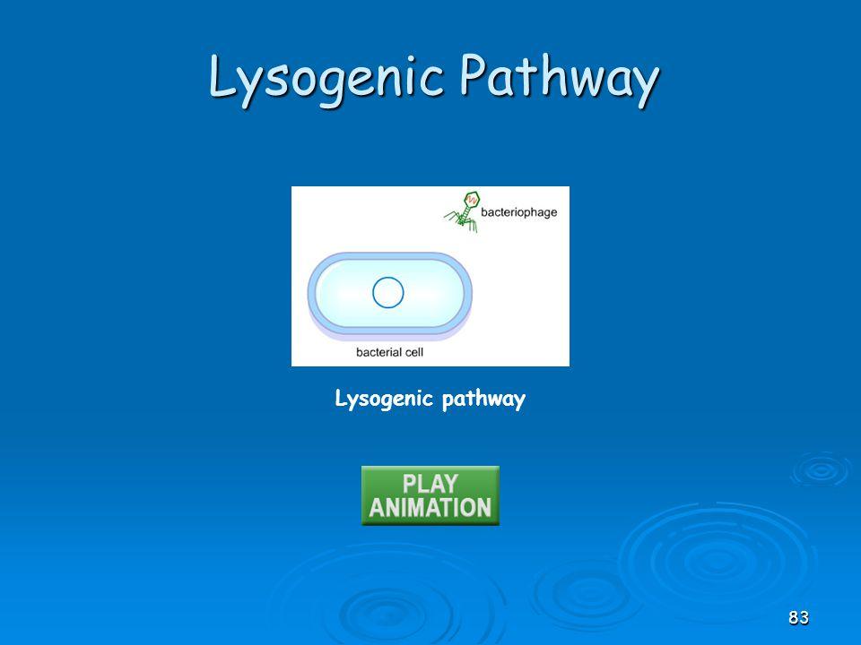 Lysogenic Pathway Lysogenic pathway