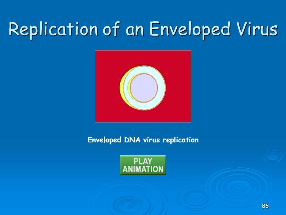 Replication of an Enveloped Virus