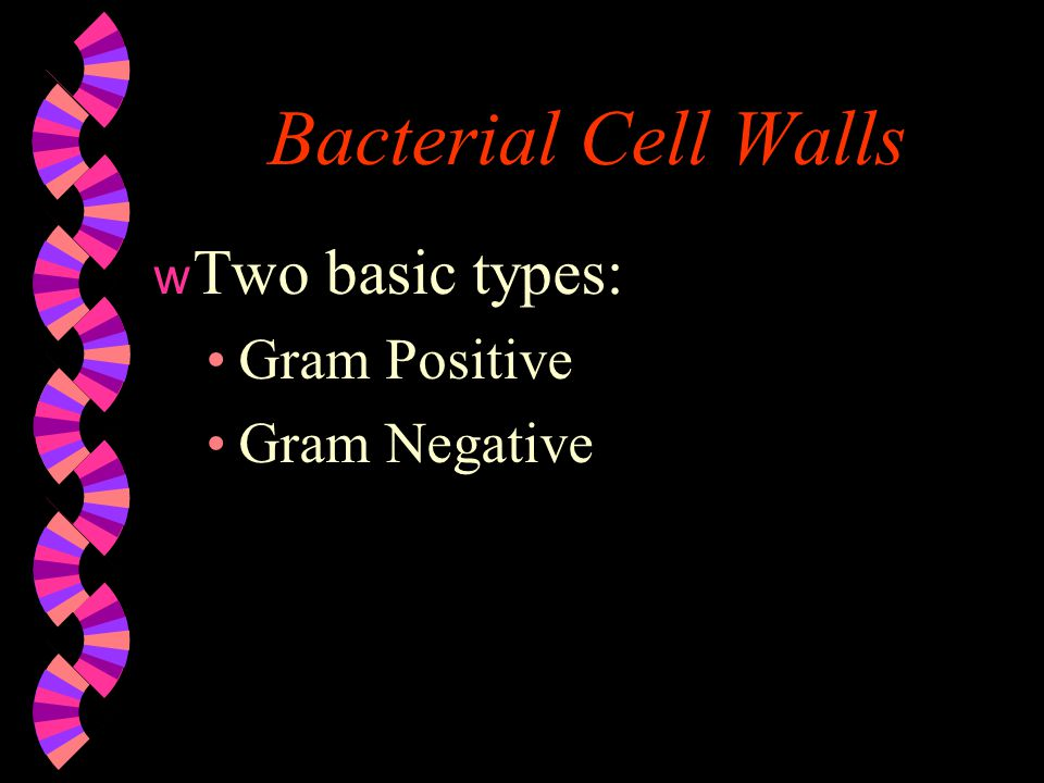 Bacterial Cell Walls Two basic types: Gram Positive Gram Negative