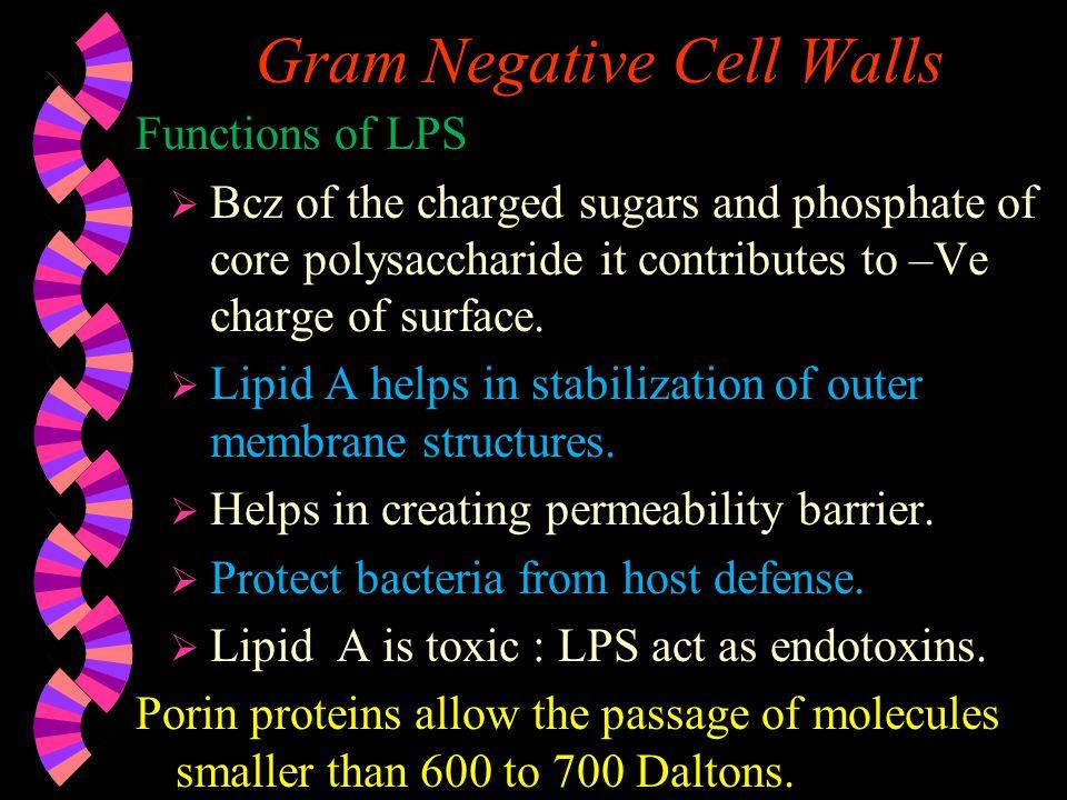 Gram Negative Cell Walls