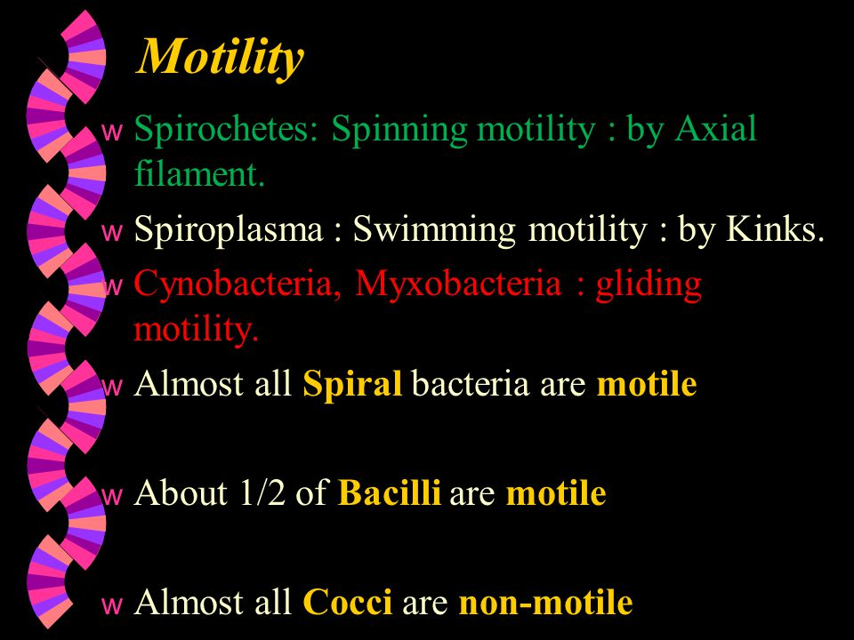 Motility Spirochetes: Spinning motility : by Axial filament.