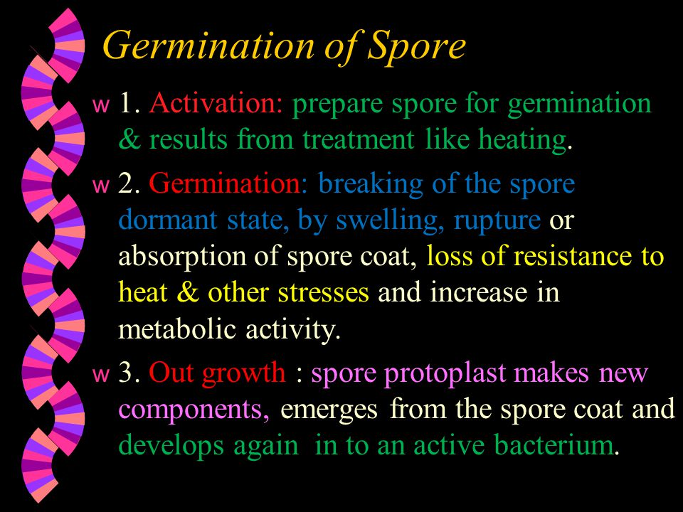 Germination of Spore 1. Activation: prepare spore for germination & results from treatment like heating.